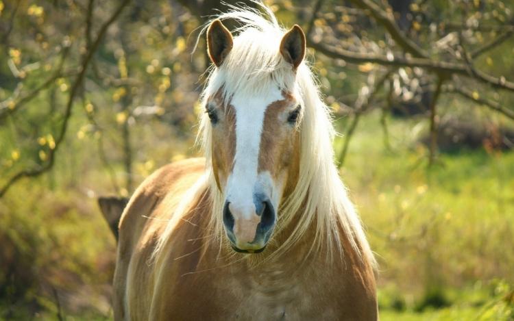 О мерах профилактики инфекционной анемии лошадей