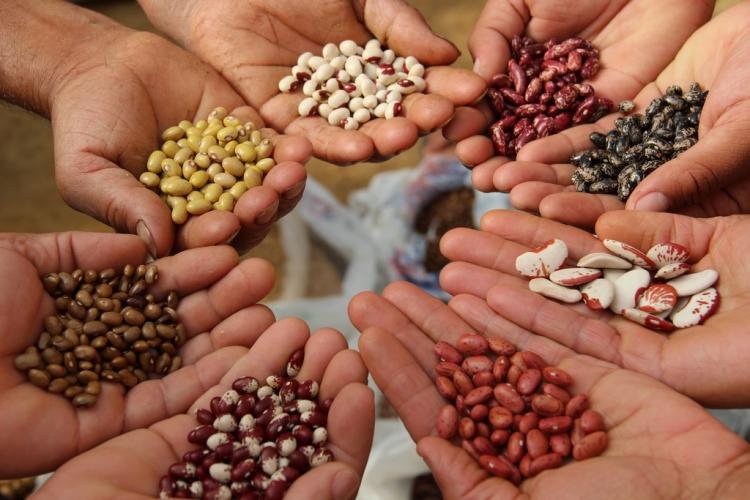 О некоторых итогах работы отдела испытаний в области семеноводства