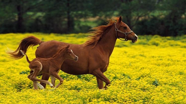 О профилактике случной болезни лошадей