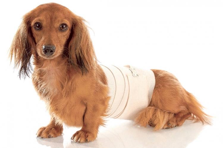 О дифференциальной диагностике новообразований в ветеринарии