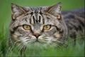 О проведении исследований на инфекционный ринотрахеит кошек