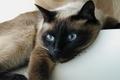 О распространенности коронавирусной инфекции среди кошек