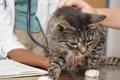 О динамике заболеваемости микоплазмозом различных видов животных