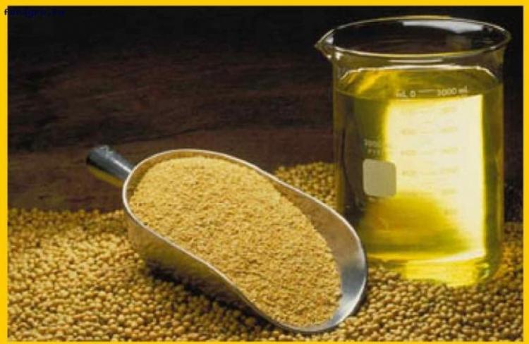 О радиологических исследованиях масложировой продукции и кормов