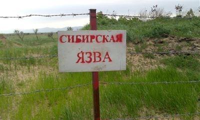 Об исследованиях проб почвы на наличие возбудителя сибирской язвы