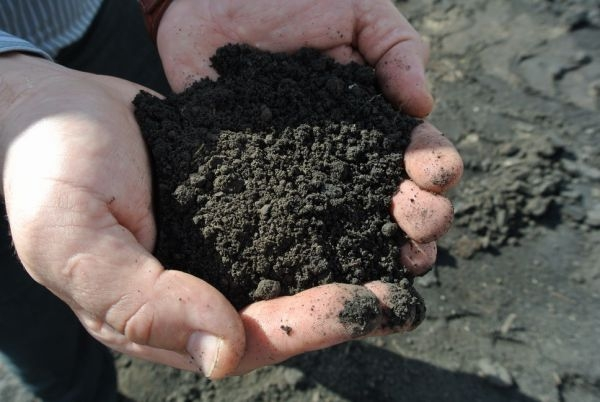 О результатах исследований почв