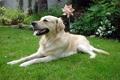О роли клинического анализа крови для  диагностики лейкоза собак
