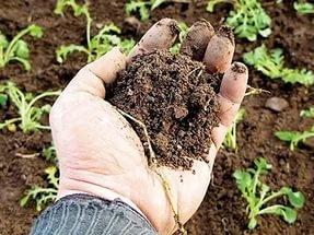 Некоторые итоги работы в области агрохимии и плодородия почв