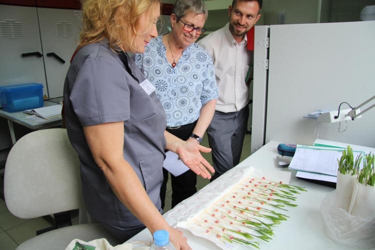 В Испытательной лаборатории ФГБУ «Краснодарская МВЛ» проведен инспекционный контроль аудиторами Международной ассоциации по контролю за качеством семян