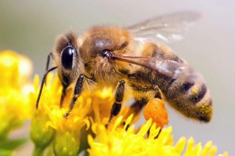 Пчеловоду на заметку