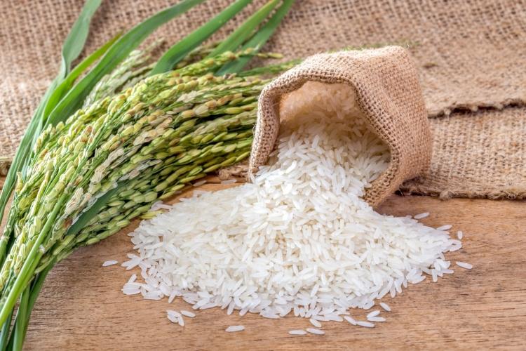 В партии семян риса выявлено несоответствие по посевным качествам