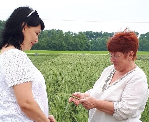 «День Поля 2021» прошел 1 июня в поселке Кубань Гулькевичского района