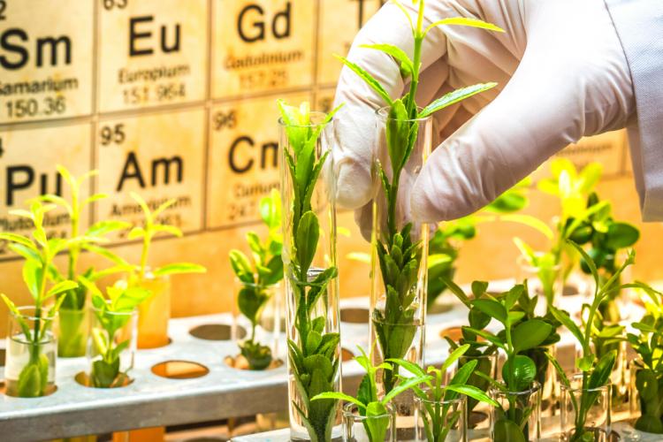 Перечень определяемых остаточных количеств пестицидов в ФГБУ «Краснодарская МВЛ» дополнится новыми позициями