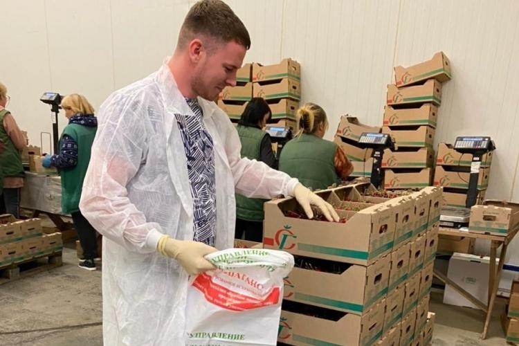 В Темрюкском МРО проведен отбор черешни для энтомологических исследований