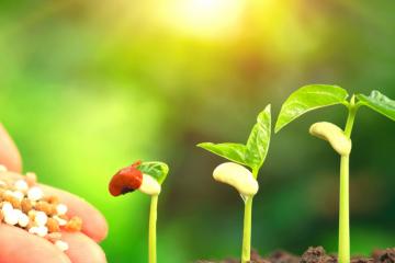 В Испытательном центре ФГБУ «Краснодарская МВЛ» выполнено 165 исследований органических удобрений