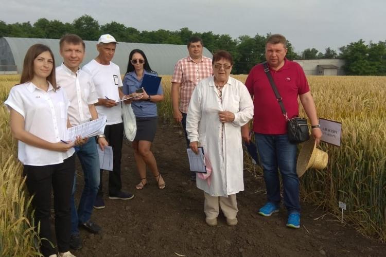 На участке грунтового сортового контроля состоялась заключительная оценка делянок озимых культур