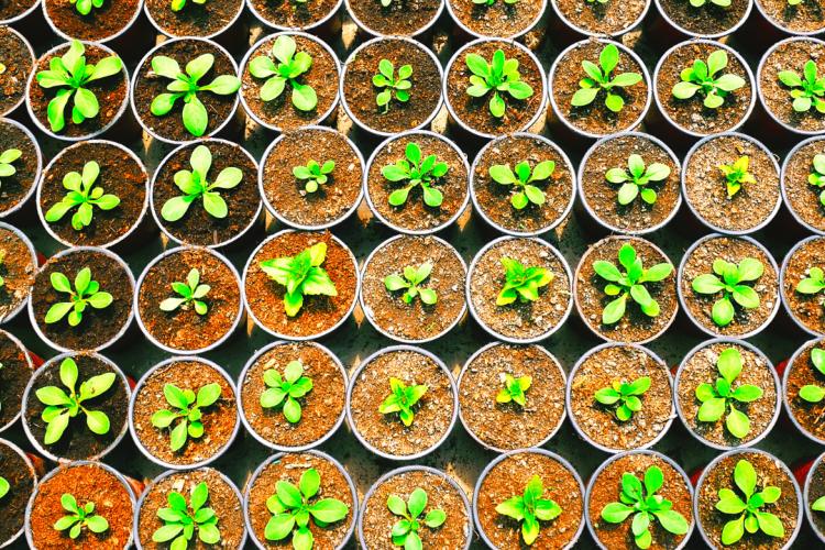 Сертифицировано12,5 тысяч тонн семян и более 6 млн единиц посадочного материала