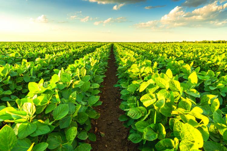 Верное решение: каждый год обследовать почву с помощью агрохимического анализа