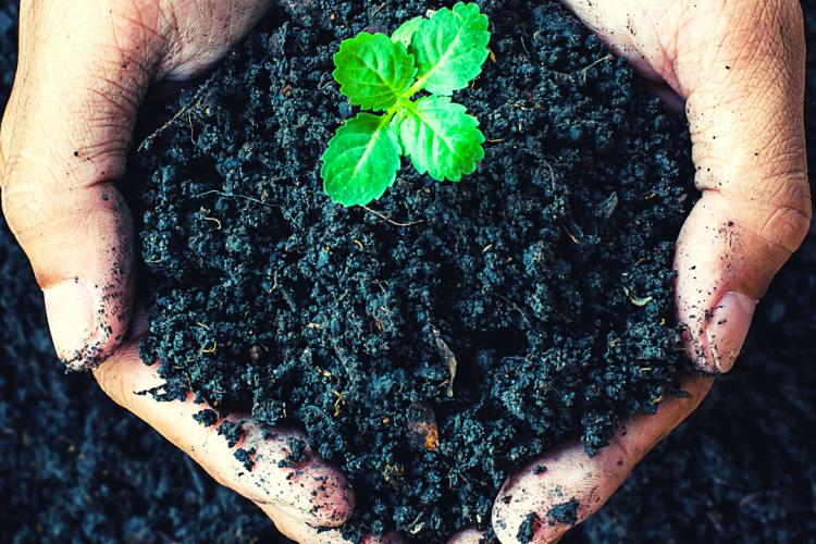 Исследования образцов почв в ФГБУ «Краснодарская МВЛ»