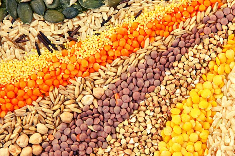 С начала года специалисты провели 14635 исследований для установления посевных качеств семян сельскохозяйственных культур