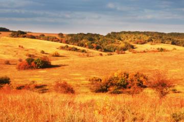 1270 проб почвы исследовано специалистами ФГБУ «Краснодарская МВЛ» с начала текущего года