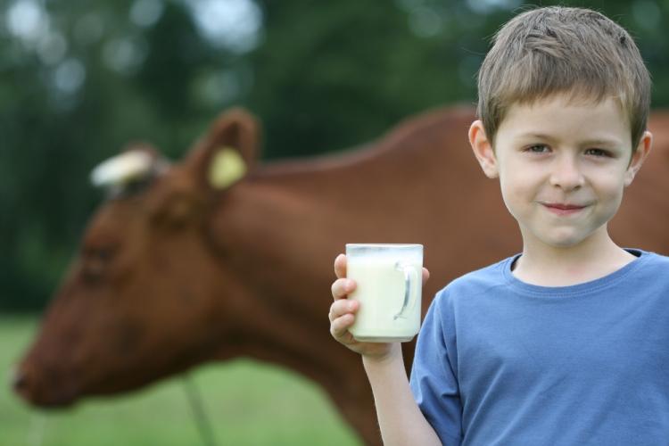 О мерах профилактики лейкоза крупного рогатого скота